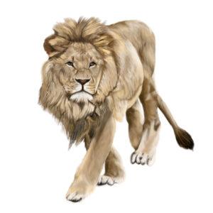 サーベルタイガーの強さをライオンと比較